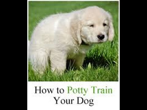 Cesar Millan - How to Potty Train Your Puppy - Cesar Millan