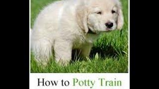 Cesar Millan - How to Potty Train Your Puppy - Cesar Millan