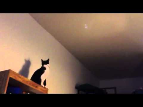 Supercat plays hero to fight the UFO so funny, parrot is not interested