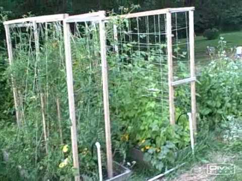 Growing Food in Seattle: A Front Yard Raised Bed Vegetable Garden