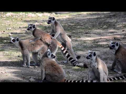Badoca Safari Park - a aventura na Natureza!