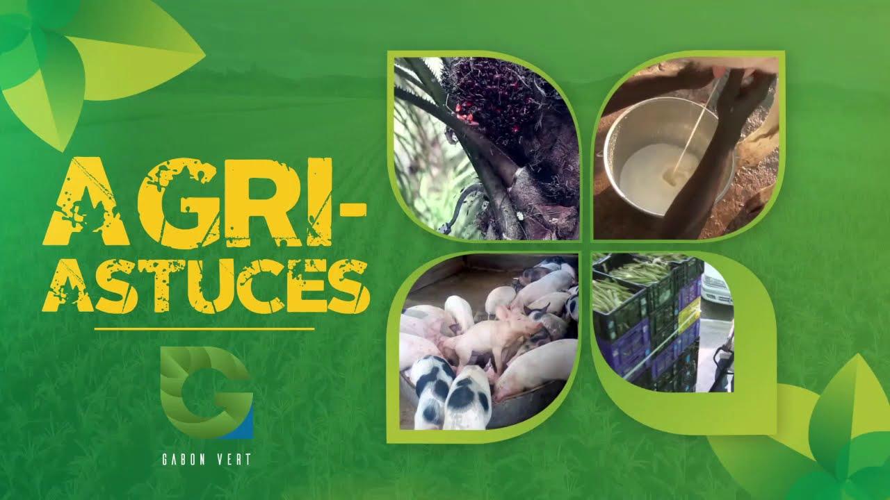 Download Alimentation et hygiène en élevage porcin