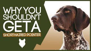 GERMAN SHORTHAIRED POINTER! 5 Reasons you SHOULD NOT GET A German Shorthaired Pointer Puppy!
