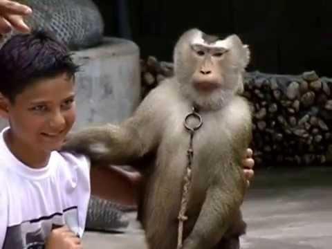 Phuket Thailand Zoo