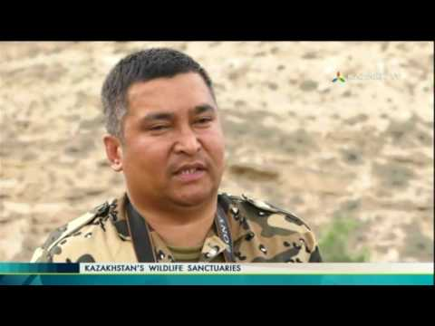 Kazakhstan's wildlife sanctuaries 11 (02.07.2017) - Kazakh TV