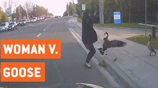 Geese Attack Woman Trying To Help Them | Wild Goose Chase