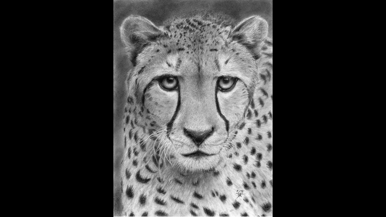 Hypnotic cheetah le gu pard youtube - Animal a dessiner ...