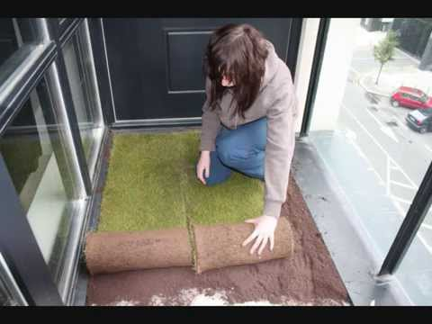 How To Grow Your Own Grass In An Apartment Youtube