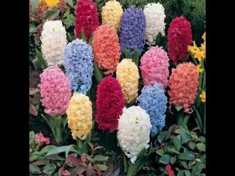 Самые красивые цветы в мире