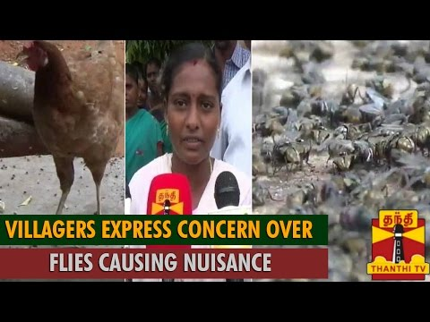 Villagers Near Sivaganga Express Concern over Flies Causing Nuisance  - Thanthi TV