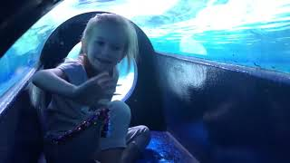 BABY SHARK Kids pretend play in  Tropicarium Funny video for kids