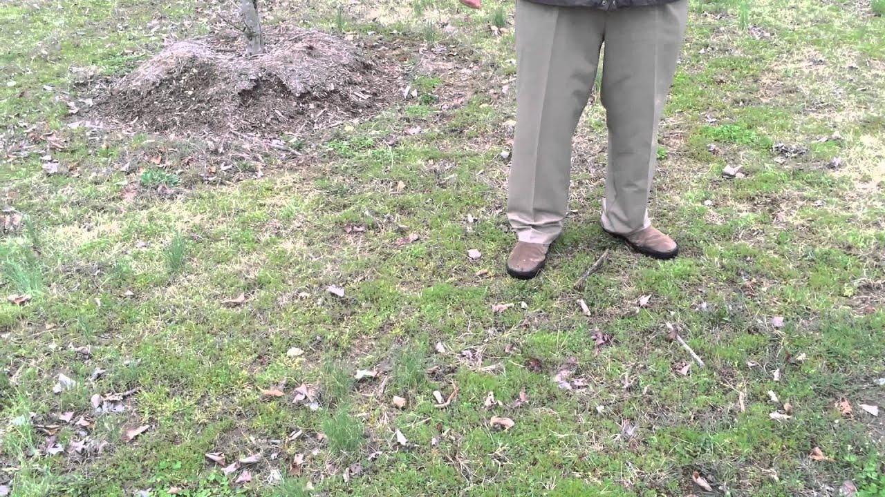Mrw Lawns Grow A Better Lawn