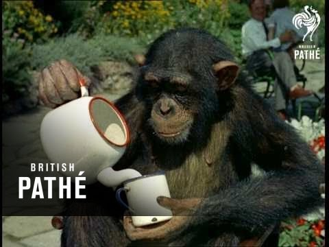 Chimps' Tea Party (1955) - YouTube