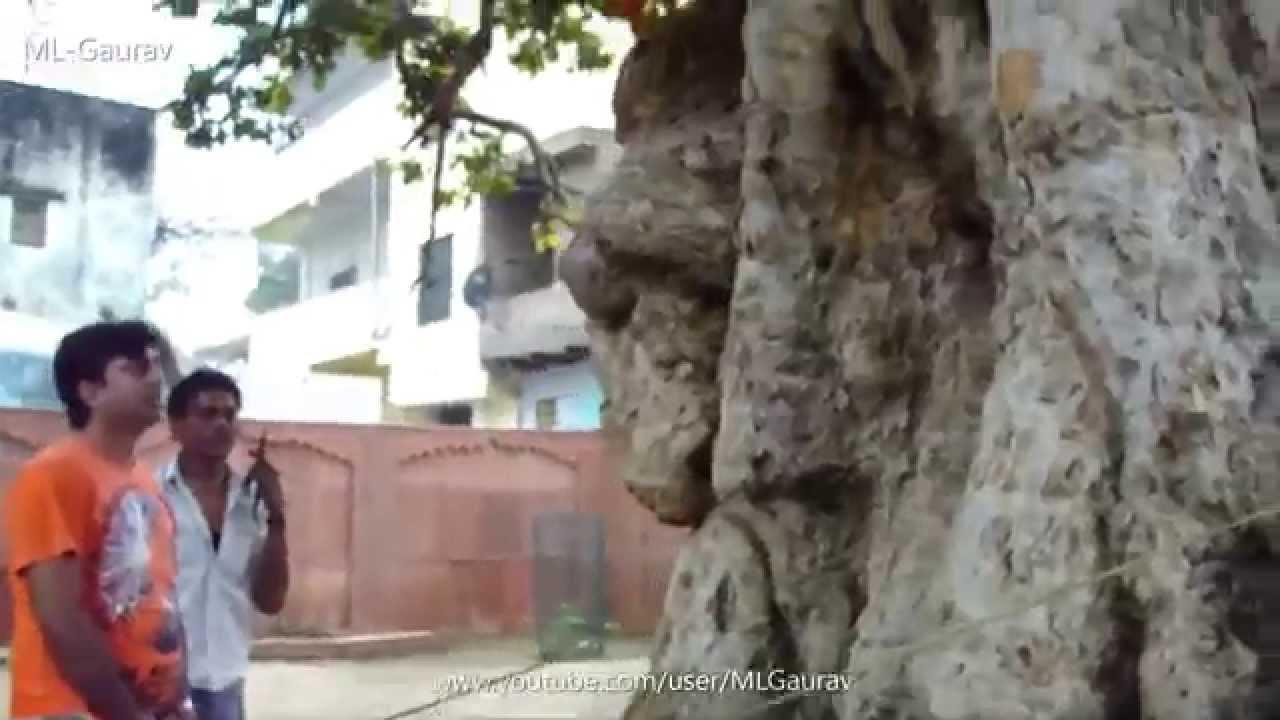 Krishna And Kaliya Naag Place, Real Story (Kaliya Ghat