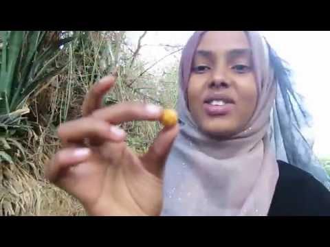 Somaliland Vlog Part 3||  AT THE FAMILY FARM | ERBADAALE