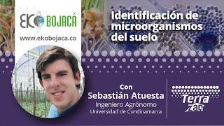 Identificación  de Microorganismos del Suelo