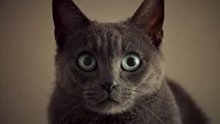 Корм для кошек Sheba: Сопротивление бесполезно. Секс (2017)
