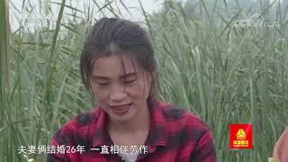 [远方的家]大运河(41) 下月湖 挖蒲菜| CCTV中文国际 - YouTube
