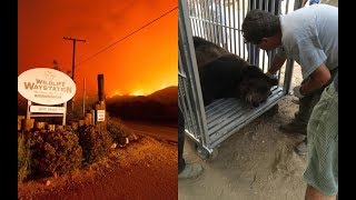 When A Deadly Wildfire Surrounded 400 Animals, Hundreds Of People Risked Their Lives To Save Them
