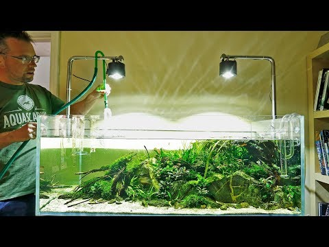 HOW TO maintain a planted tank aquascape in 2 minutes