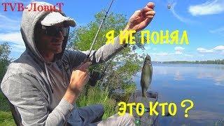 Рыбалка | ТАКУЮ РЫБУ Я ЕЩЕ НЕ ВИДЕЛ!!! Ловля на Фидер в озере.