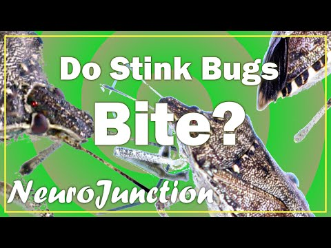 Do Stink Bugs bite? Learn some stuff about Stink Bugs!