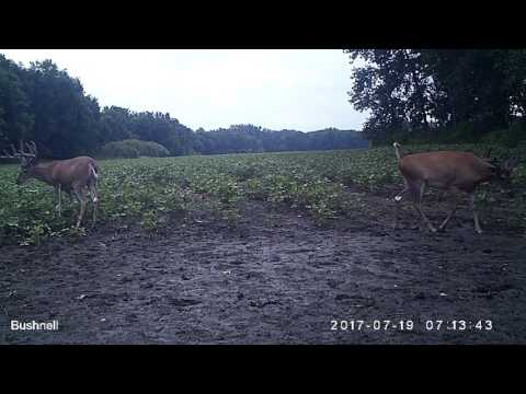 Buck Video:  Bureau County IL 374 Acres of Land for Sale HD