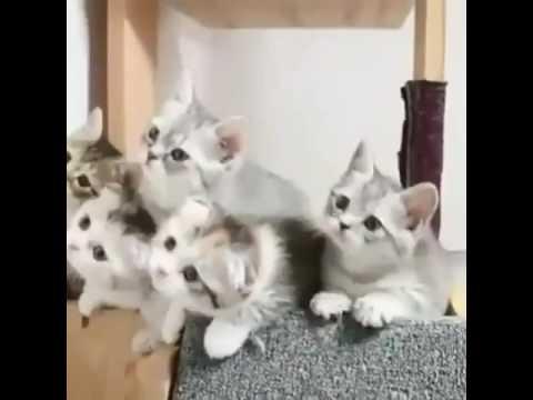 76+ Gambar Animasi Lucu Kucing Paling Bagus