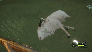 theHunter  Call of the Wild Albinos gnu 4
