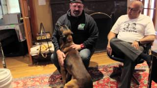 Knpv Mallinois Rapes Dog Trainer-k9 Control Tv