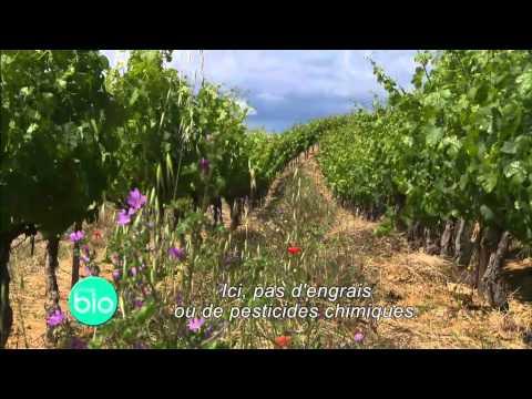 La viticulture bio : une filière dynamique, pour la terre et le plaisir (Minute BIO 2012)