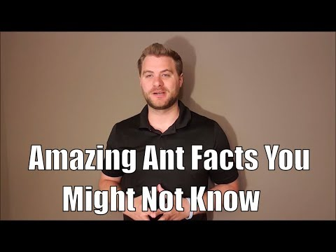 Amazing ant facts you might not know