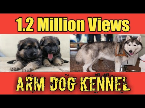 ARM Dog Kennel : Home of Quality Puppies