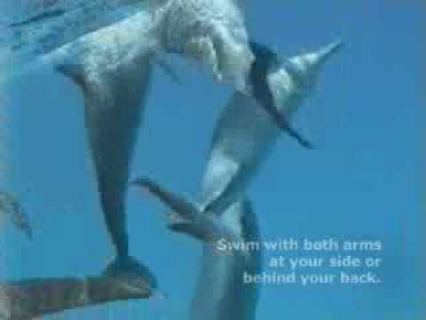 Human Dolphin Interaction and Approach