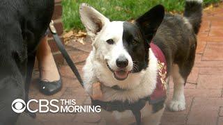 Nature & Animals   CBS This Morning