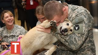 Dogs Welcoming Home Soldiers