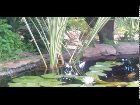 estanque carpas koi con cascada y ventana