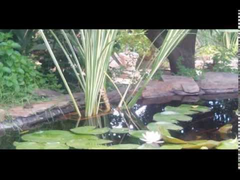 Construccion estanque carpas koi con cascada y ventana for Carpas estanque