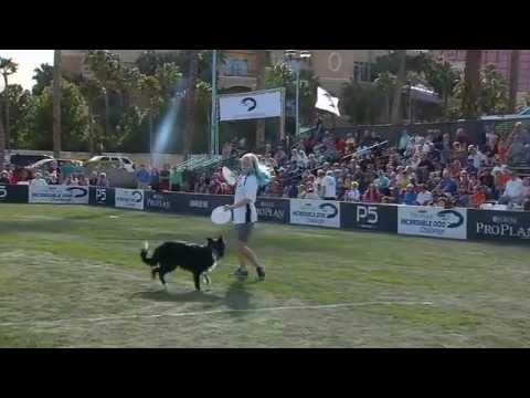 Flying Disc - 2013 Purina® Incredible Dog Challenge® Las Vegas