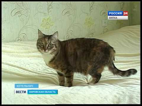 Замерзающий Котельнич (ГТРК Вятка)