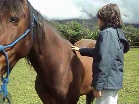Autism Horses