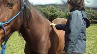 Equine therapy with child on autism spectrum - Horse Guided Empowerment.wmv