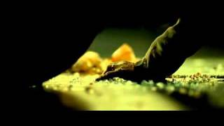 22 пули: Бессмертный (2010) DVDRip|Фильм|Боевик