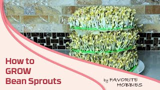 How to Grow Bean Sprouts at Home - very simple! & How to Remove Roots