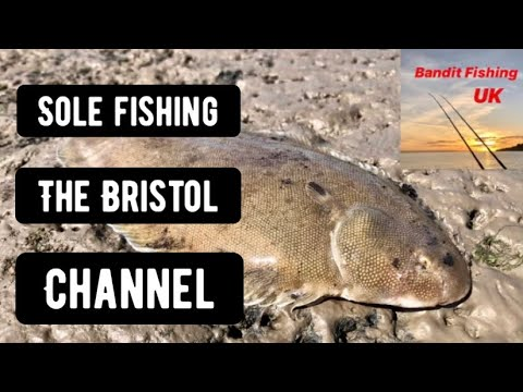Solo Bandit - Sole Fishing In The Bristol Channel.