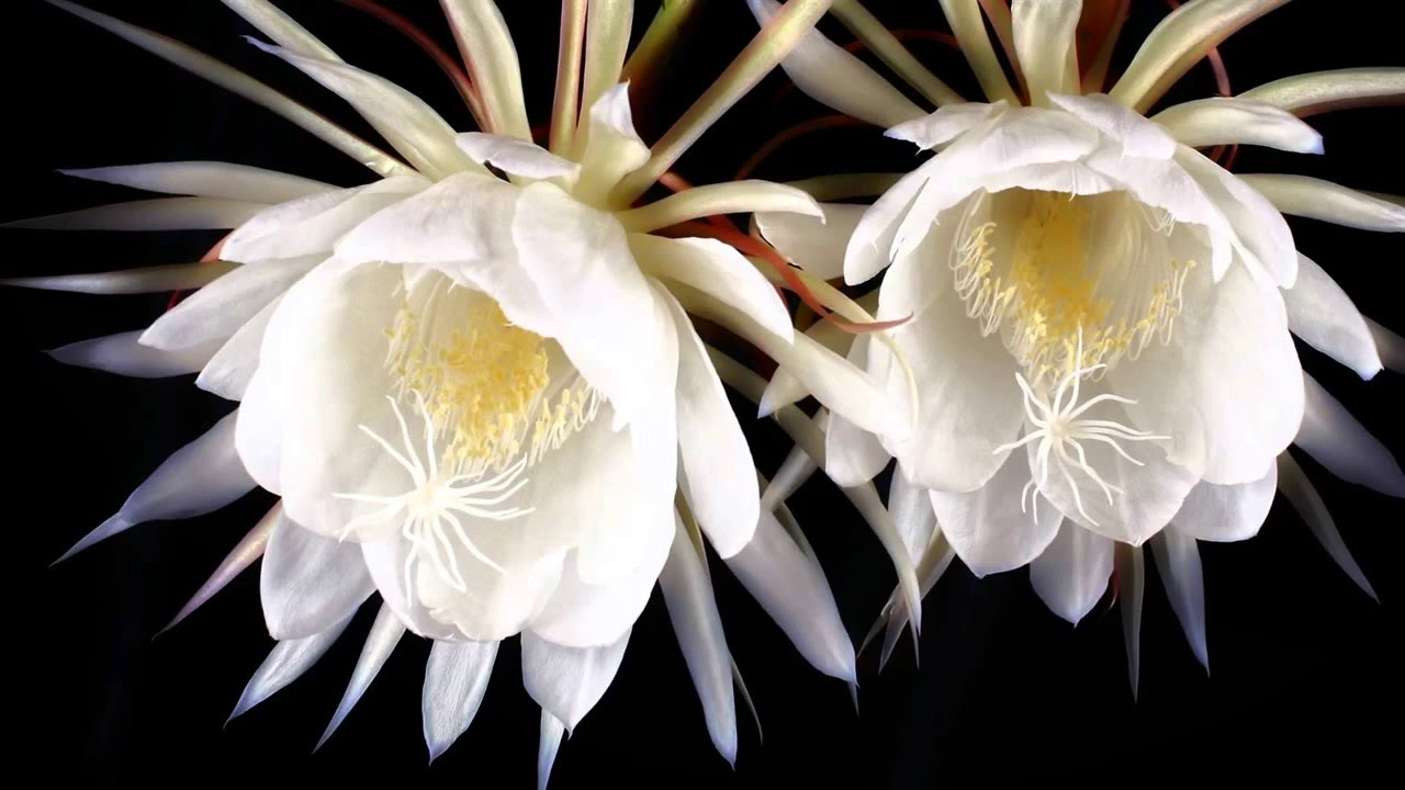 World most beautiful and rarest flowers top 10 lists youtube dhlflorist Image collections