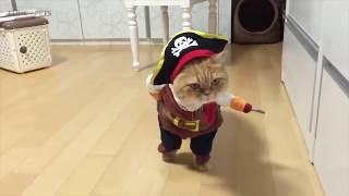 CATS in Ridiculously Adorable COSTUMES Funny Pets