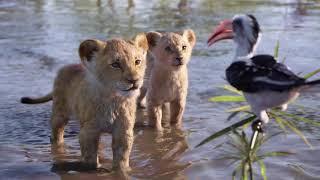 Песня Симбы l Скорей Бы Мне Стать Королем l Только Аудио l Lion King I Just Can't Wait To Be King