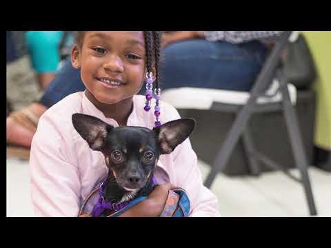 Animal Rescue League of Boston Pet Wellness Clinic – Codman Square