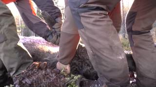Moose hunt Sweden Sauer 202 Outback